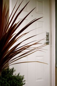 cordyline-australis-at-front-door-feb-08.jpg