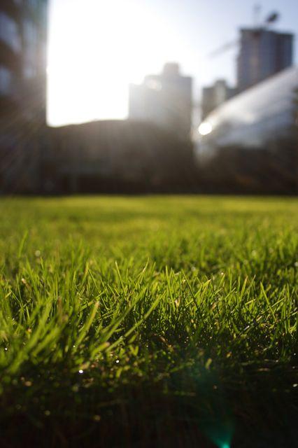 front-lawn-feb-08.jpg