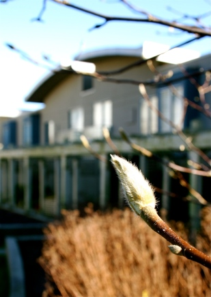 front-magnolia.jpg