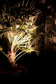 nighttime-lights-front-garden-feb-08.jpg