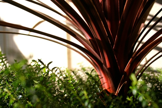 cordyline-australis-mar-08.jpg