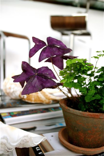 indoor-gardening-mar-08.jpg